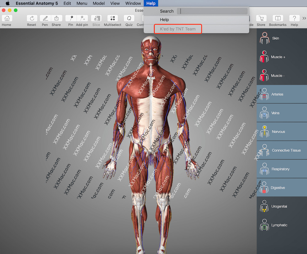 Essential Anatomy v5.0.5 for Mac英文破解版 3D人体解剖学习软件