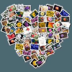 FigrCollage for Mac v2.5.16 英文破解版下载 图片拼图软件